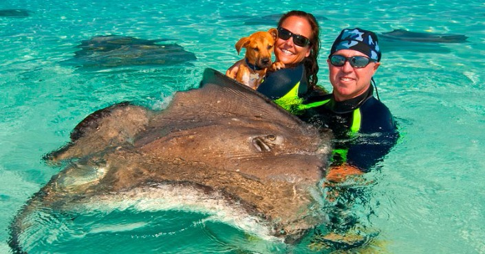 Swim Dolphin Lovers 'y Stingray City Experience