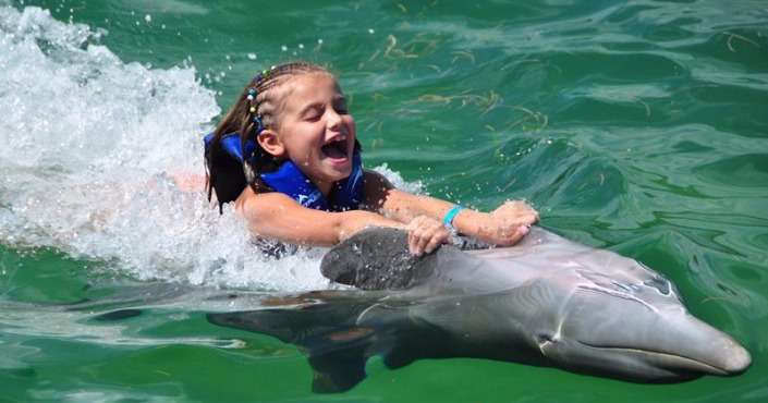 Dolphin Royal Swim en Saint Kitts