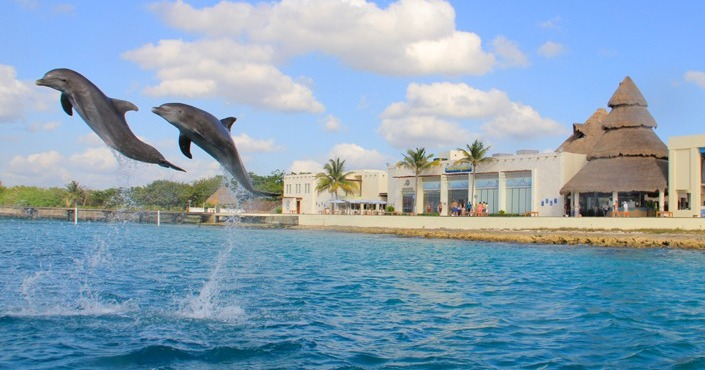 DOLPHIN ROYAL SWIM RIVIERA MAYA