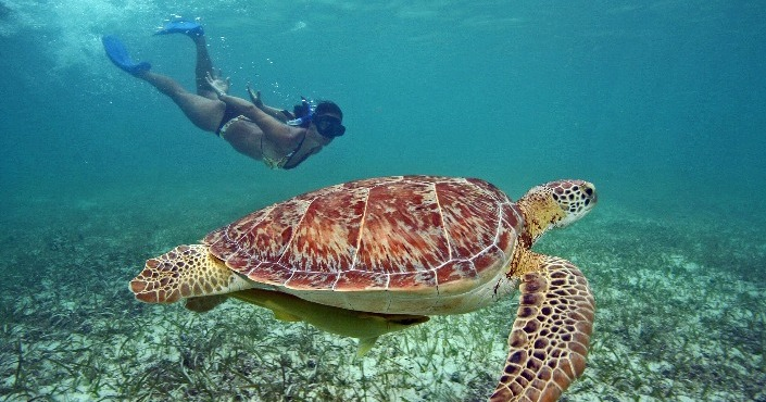 Snorkeling Cancun Tour Privado